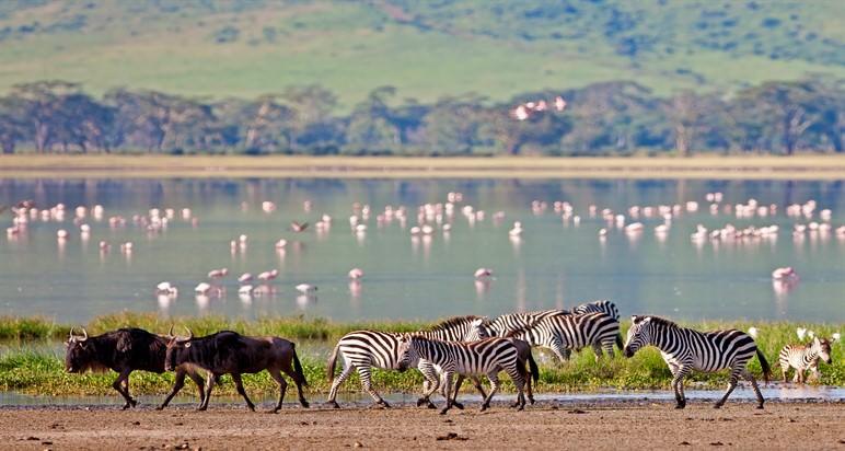 טיולים מאורגנים לטנזניה